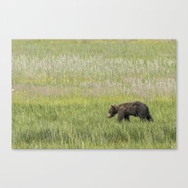 Young Brown Bear Cub, No. 2 Canvas Print