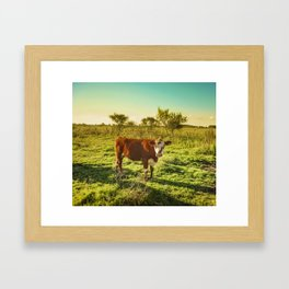 Cow in the Field Watching the Camera Framed Art Print