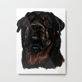 Male Rottweiler Metal Print