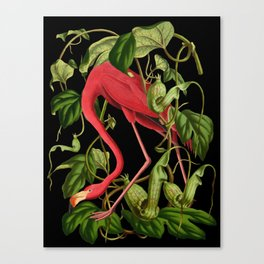 Flamingo Black Canvas Print