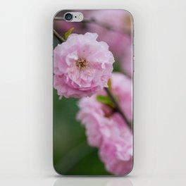 Flowering Almonds 2 iPhone Skin