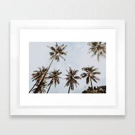 palm trees xiv / chiang mai, thailand Framed Art Print