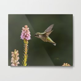 Hummingbird and flower II Metal Print