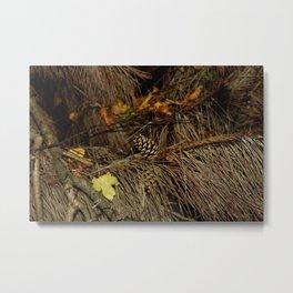 Autumn Firs Metal Print