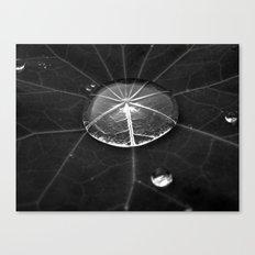water drop XIV Canvas Print