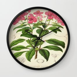 Heterocentron Roseum Vintage Botanical Floral Flower Plant Scientific Wall Clock
