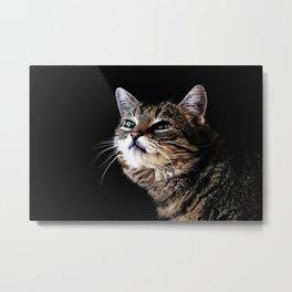 Lieschen Müller, Lilly the sweet tiger cat Metal Print