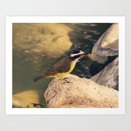 Lakeside Great Kiskadee Art Print