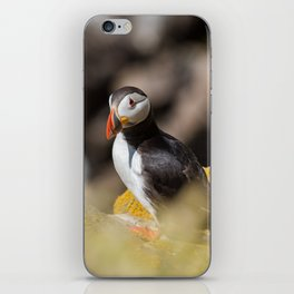 Puffin from Ireland (RR 284) iPhone Skin