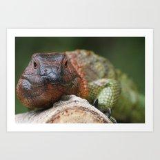Colorful Iguana Art Print
