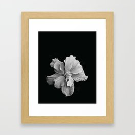 Hibiscus Drama Study - Black & White High Impact Photography Framed Art Print