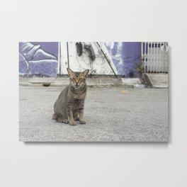 Tabby cat talking in the streets of Kuching, Malaysia Metal Print