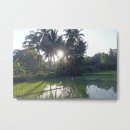 Philippine Rice Fields Metal Print