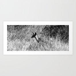 Fawn in the Brush Art Print