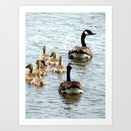 Animals of Nature Art Print