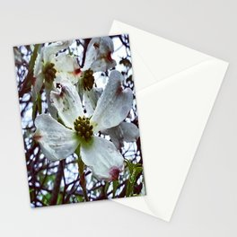 Dogwood Blossoms in the Rain Stationery Cards