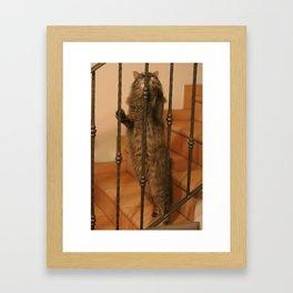 siberian cat Framed Art Print