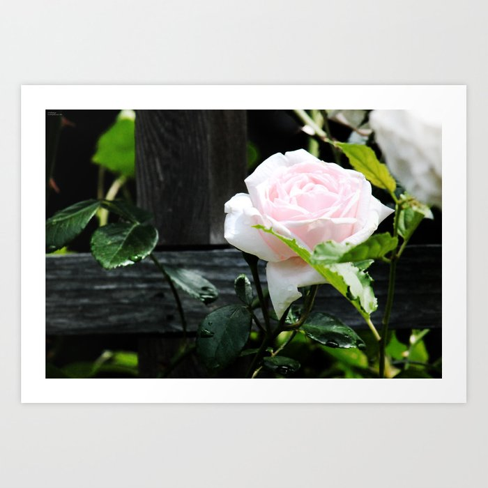 Pastel Pink Art Print