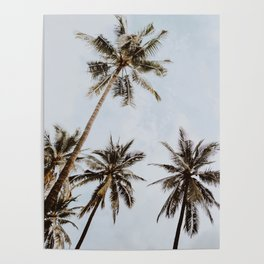 palm trees xiv / chiang mai, thailand Poster