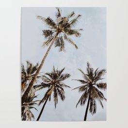 palm trees xiv / chiang mai, thailand Poster
