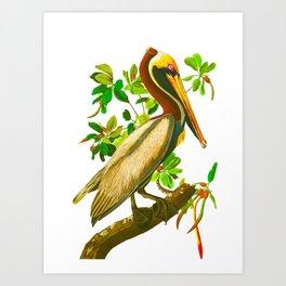 Brown Pelican Vintage Illustration Art Print