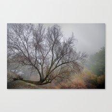 Singular tree at the mountains Canvas Print