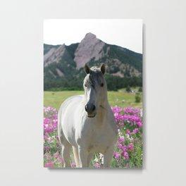 stallion of the front range Metal Print