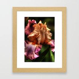 Peach Iris is Intense Framed Art Print
