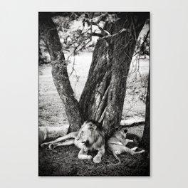 African Safari Lion Canvas Print