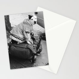 dog in a sweater Stationery Cards