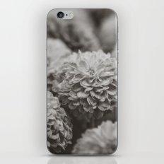 Sepia Black and White Botanical -- Chrysanthemums iPhone & iPod Skin