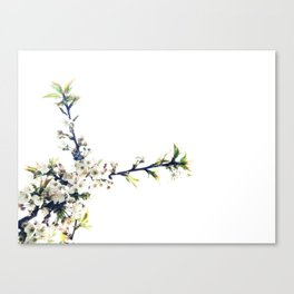 Peaches and Cream Canvas Print