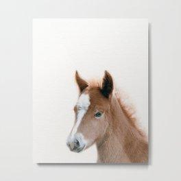Baby Foal, Baby Animals Art Print By Synplus Metal Print