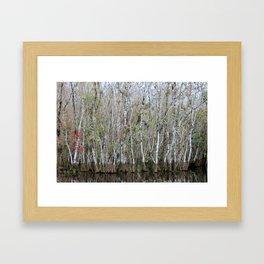 Autumn In The Everglades Framed Art Print