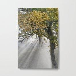 Sunrays Through The Oaks. Autumn dreams. Sierra Nevada Metal Print