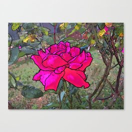 Red Rose in the garden Canvas Print