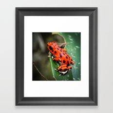 Red Frog Framed Art Print