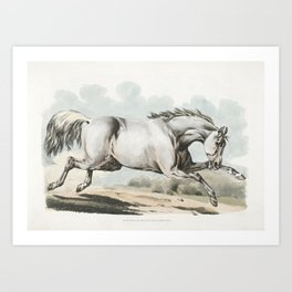 Illustration of a white horse running from Sporting Sketches (1817-1818) by Henry Alken (1784-1851) Art Print