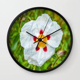 The Lost Gardens of Heligan - Rockrose Wall Clock