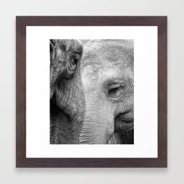 A pair of Pachyderms Framed Art Print