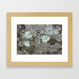 Lichen on granite Framed Art Print