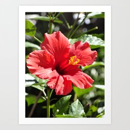 Hibiscus V Art Print