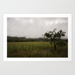 Beautiful mist Art Print