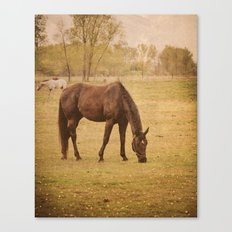 Horse Photograph. Wisconsin Landscape and Nature. Horse Grazing.   Canvas Print