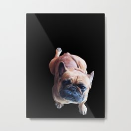 Cute French Bulldog Kneel for a Cookie! Metal Print
