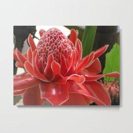 Laos Flower Metal Print