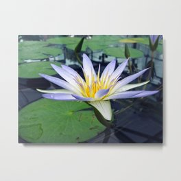 Amazon Waterlily Metal Print
