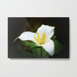 Flower photography Trillium Flowers Nature photography Metal Print