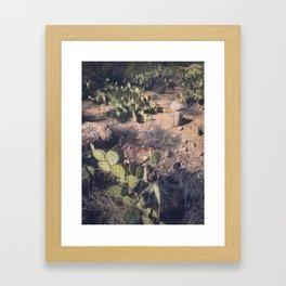 Catalina State Park Framed Art Print