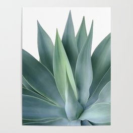 Agave blanco Poster